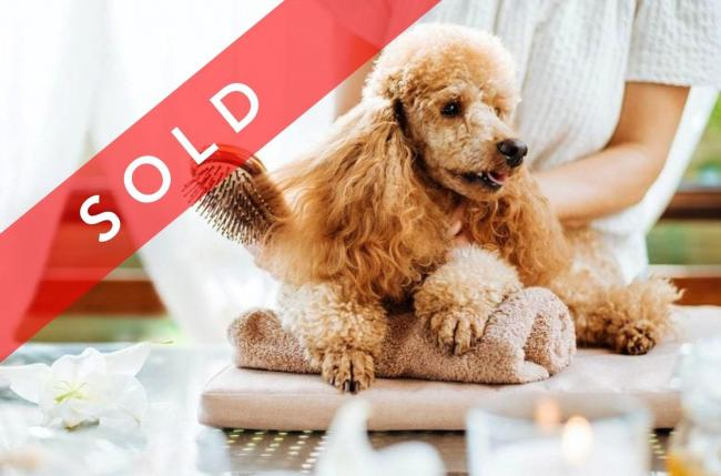 SOLD! Dog Daycare & Grooming Business image