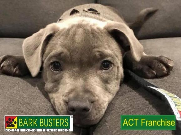 BARK BUSTERS FRANCHISE - ACT.  IDEAL BUSINESS FOR DOG LOVERS! image