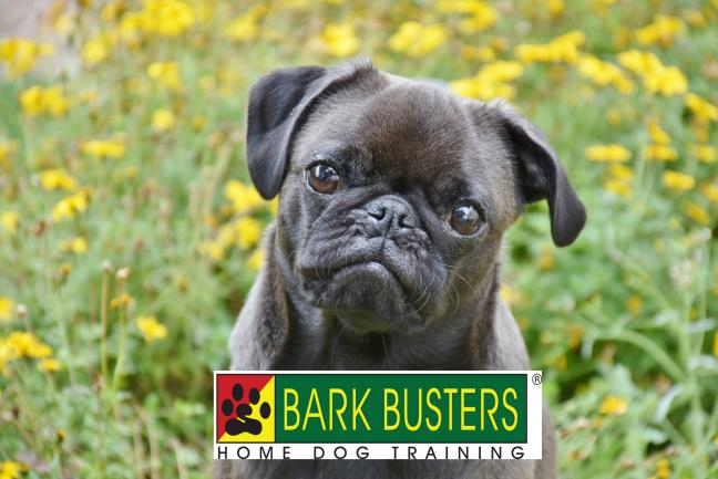 Bark Busters In Home Dog Training Franchise – Sydney, NSW image