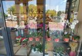 Florist Business For Sale - Prime Shopping...Business For Sale