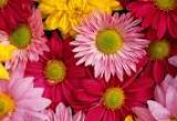 Retail FloristBusiness For Sale