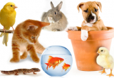 Import Pet Products From China for Passive...Business For Sale