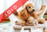 Dog Daycare & Grooming Business Business For Sale
