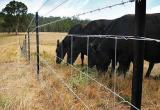 Highly Profitable Tassie Fencing Contractor,Blue...Business For Sale