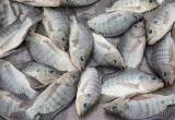 High Turnover Fresh Fish and Seafood Retail...Business For Sale