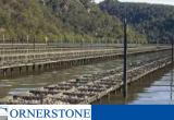 Merimbula/Pambula Oyster Farm for sale CSBB1903... Business For Sale