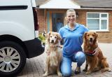 20243 Fully Mobile Pet Services Business Business For Sale