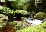 Tarkine Wilderness Lodge Business For Sale