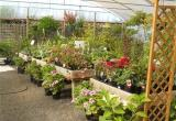 F/Hold Propagation Nursery $240,000Business For Sale