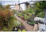 Plant NurseryBusiness For Sale