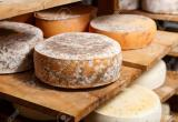 WANTED CHEESE MAKING BUSINESS Business For Sale