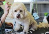 DOG GROOMING BUSINESS WANTEDBusiness For Sale