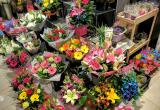 Busy street Florist  shop business Business For Sale