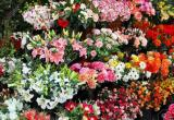Camberwell Florist Business Business For Sale