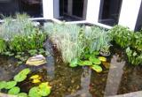 Aquarium and Pond Cleaning and Maintenance...Business For Sale