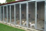 Freehold Boarding Kennel for sale - Great...Business For Sale
