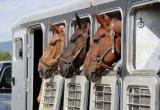 WEB BASED BUSINESS FOR HORSE TRANSPORT -... Business For Sale