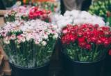 Well-Established Florist Shop For Sale -...Business For Sale
