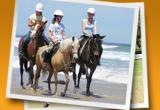 HORSE RIDING SCHOOL - $100k WIWOBusiness For Sale