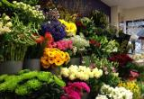 Florist Business For Sale - Business For Sale