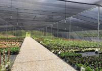 Wholesale Plant Nursery - Business and Freehold...Business For Sale
