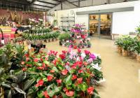 The Fresh Flower MarketBusiness For Sale