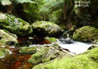 Tarkine Wilderness LodgeBusiness For Sale