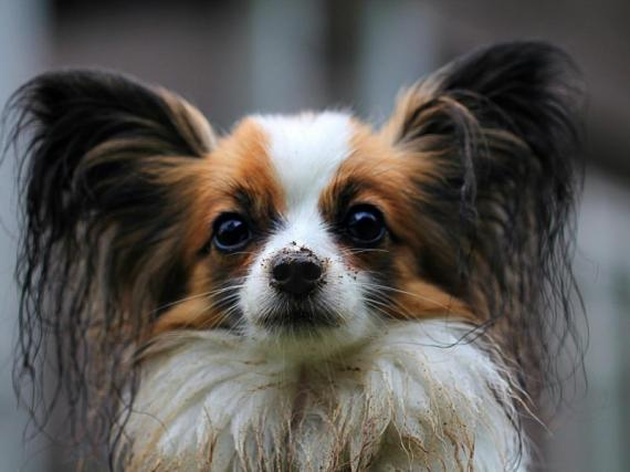 Dog Grooming Business For Sale Brisbane
