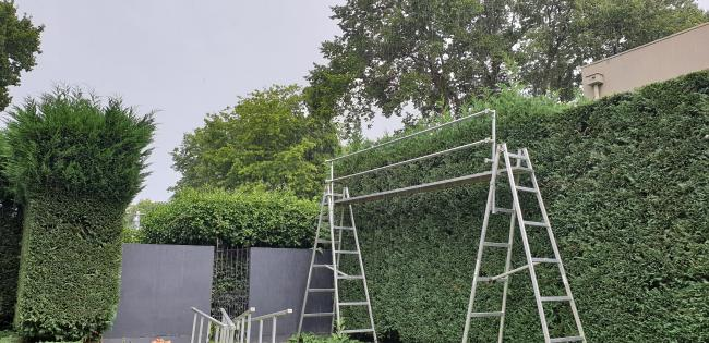 20264 Successful Hedge Trimming Business image 4