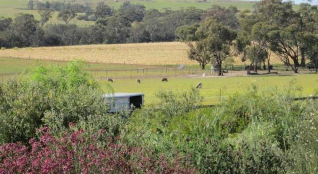 Lavendale Farmstay - Cottages and 54 Hectares – Western Australia image 3